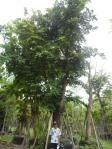 T4 ต้นสาธร 19-a