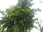 T4 ต้นสาธร 19-c